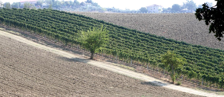 Vitigno Azienda vinicola Baldarelli Valerio